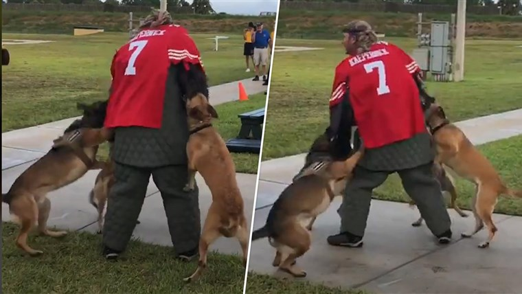 Navy to thoroughly investigate man dressed in Colin Kaepernick jersey for K-9 demonstration